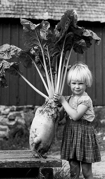4-åriga Ingrid från Rösa med en jättebeta som vägde 12,2 kg. Foto: Egon Rangbo, 1960