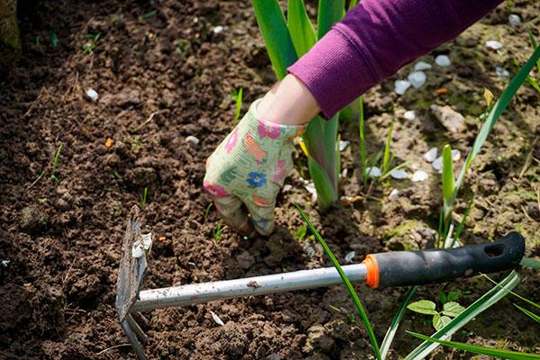 Börja rensa ogräs tidigt, det vinner du på